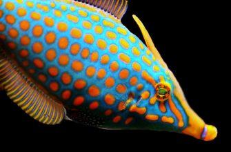 Самые опасные рыбы. сс0