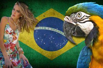 Факты о Бразилии cc0