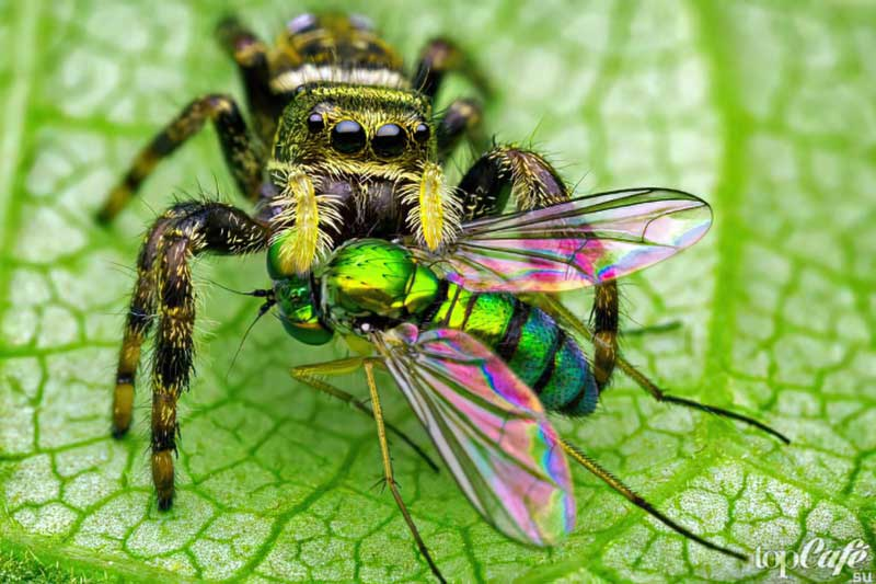 Фото самых необычных пауков