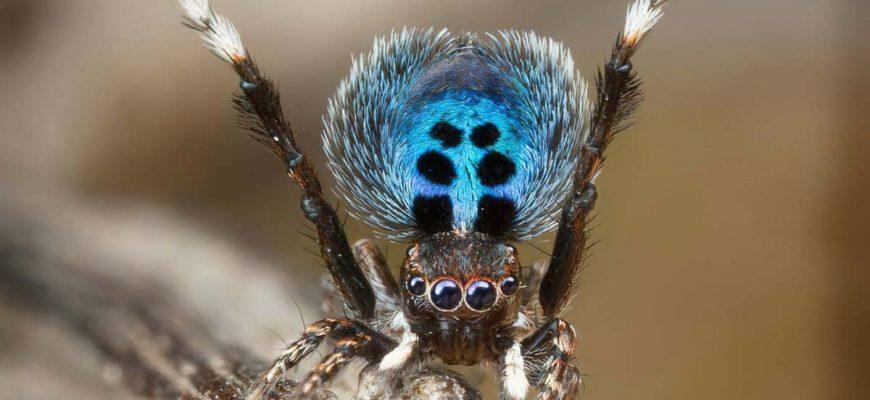 Самые необчные пауки сс0