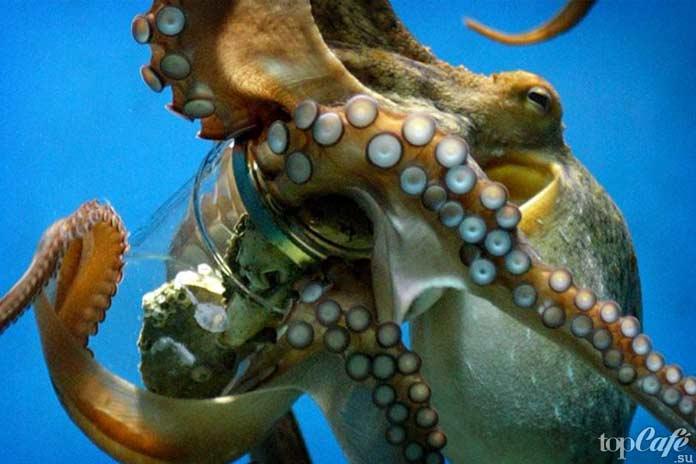 Интеллект осьминога