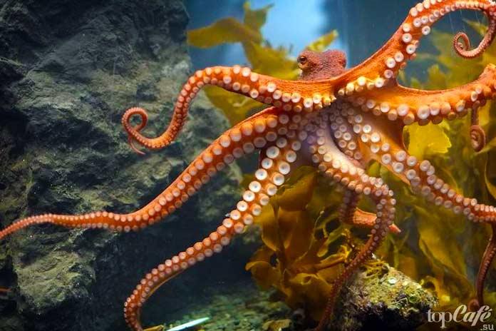 Факты об осьминогах: Название