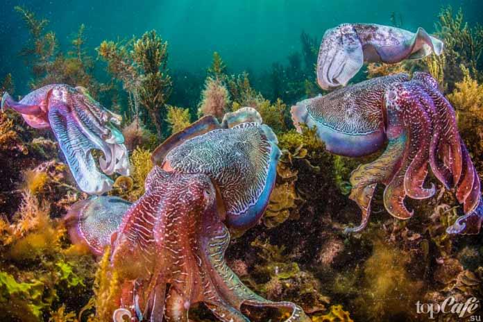 Факты об осьминогах: Примерная семья
