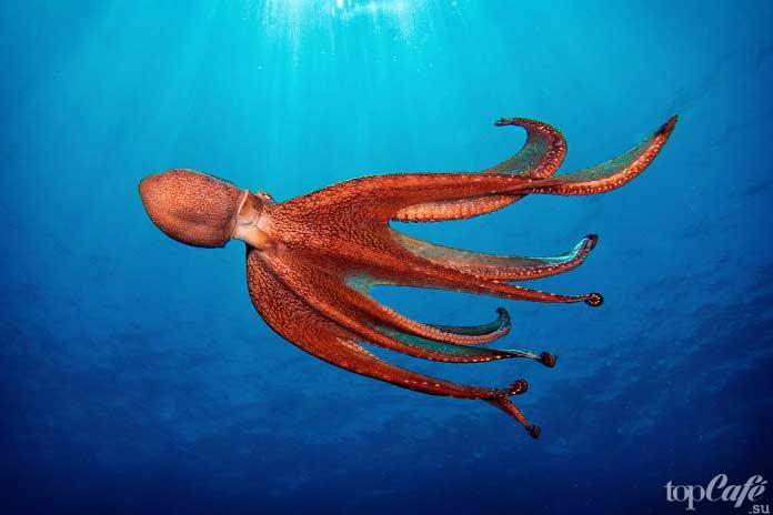 Факты об осьминогах: Реактивные животные