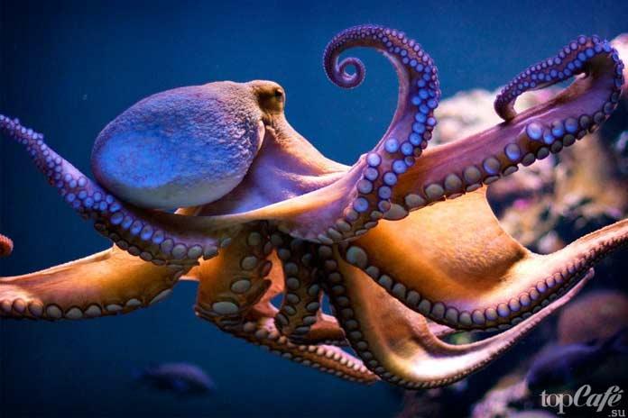Тело осьминога