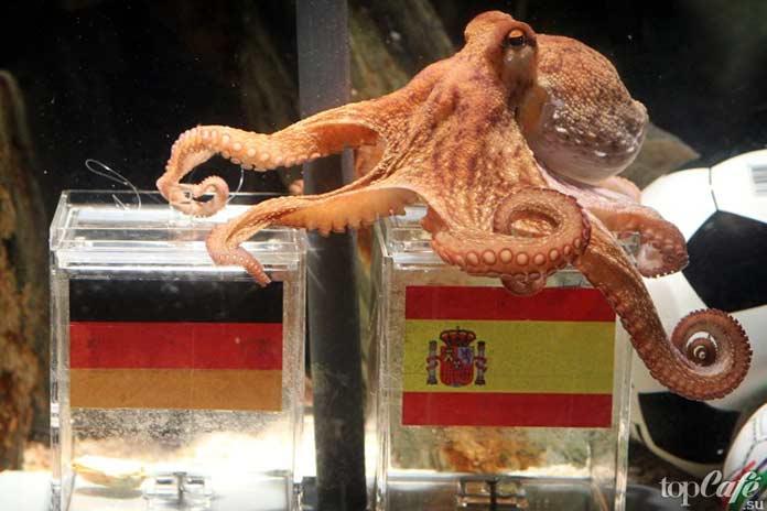 Факты об осьминогах: Знаменитый Пауль