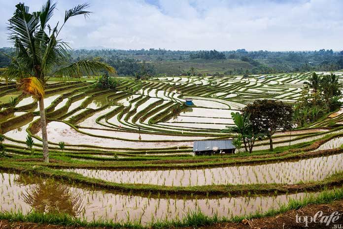Рисовые террасы Джатилувих (Jatiluwih)