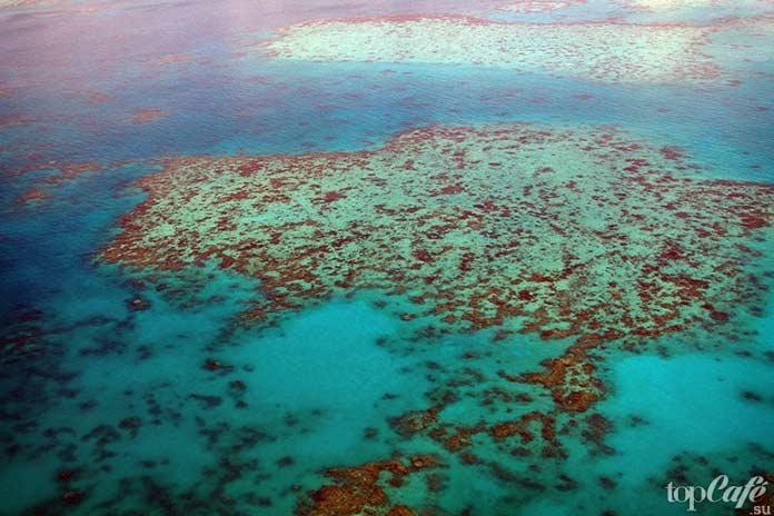 Большой Барьерный риф. CC0