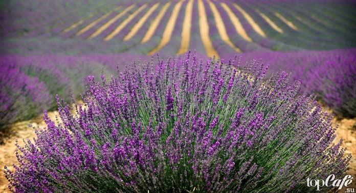 Красивые деревни Франции. CC0