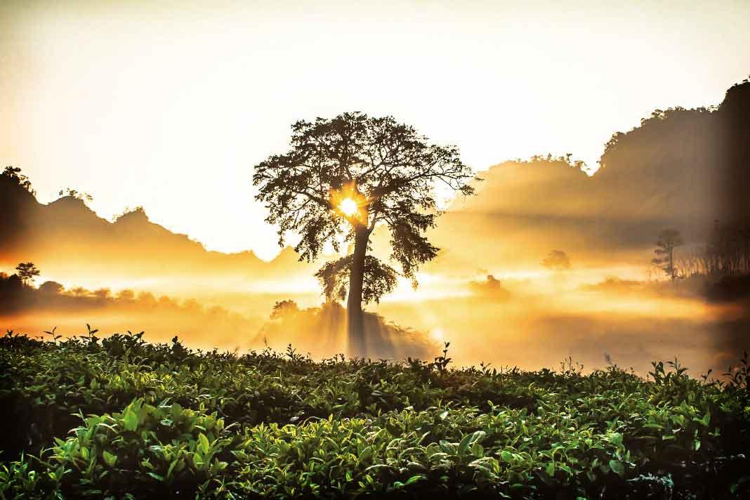 Cамые красивые деревья в мире (  много ФОТО)