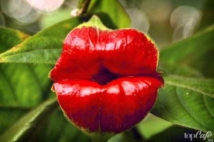 Растения, похожие на части человеческих тел