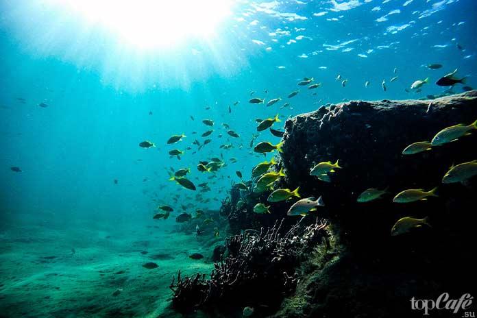 ТОП-10 фактов об океане. Горная цепь. CC0