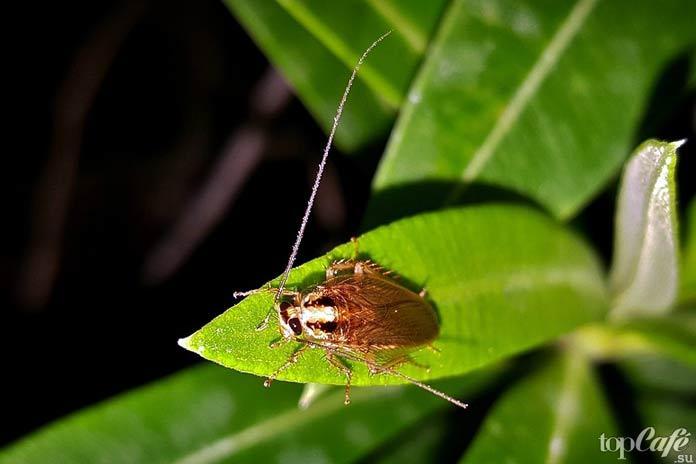 Факты о тараканах: Ареал тараканов