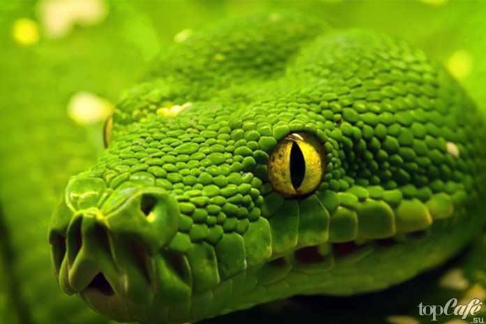 Самые интересные факты о змеях: Датчик температуры