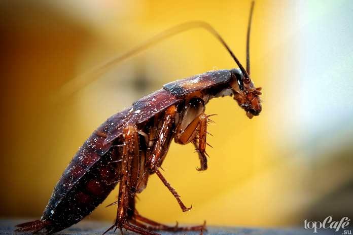 Факты о тараканах