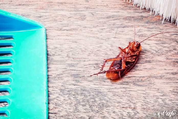 Как поймать таракана