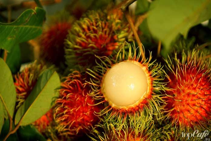 Список самых необычных фруктов: Рамбутан CC0