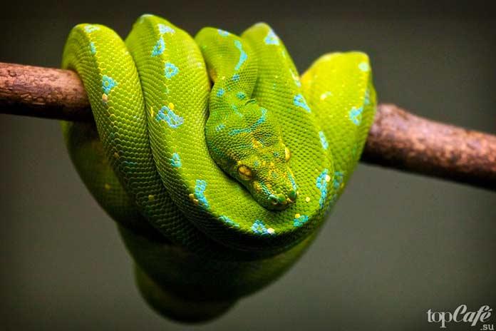 Самая красивая змея