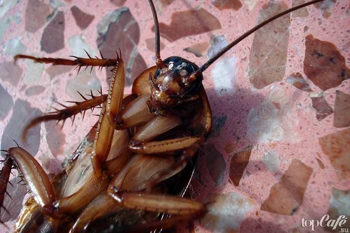 Факты о тараканах: Таракан на спине