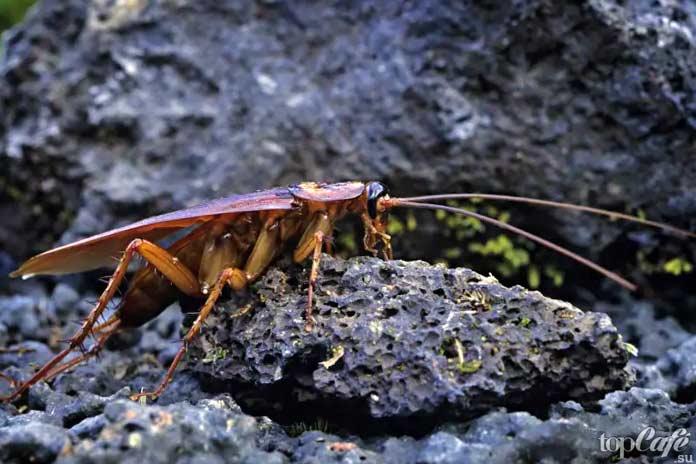 Факты о тараканах: Тараканы после ядерной войны