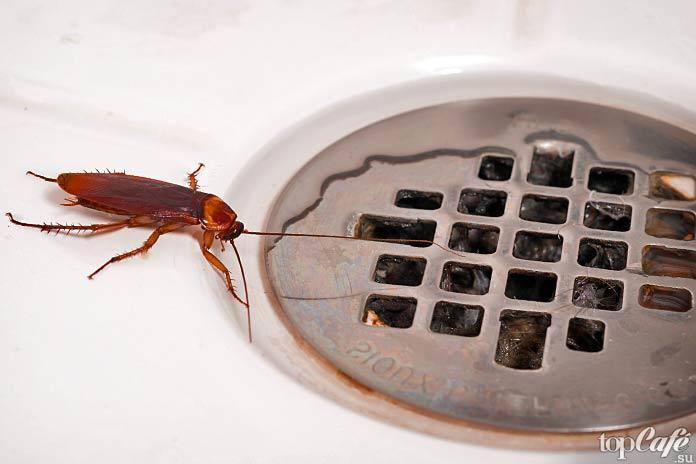 Выносливые тараканы