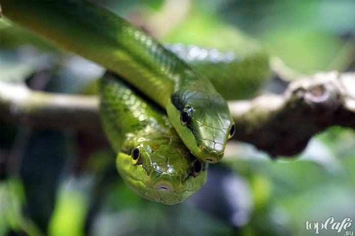 15 интересных фактов о Гавайях: Змеи на Гавайях. СС0