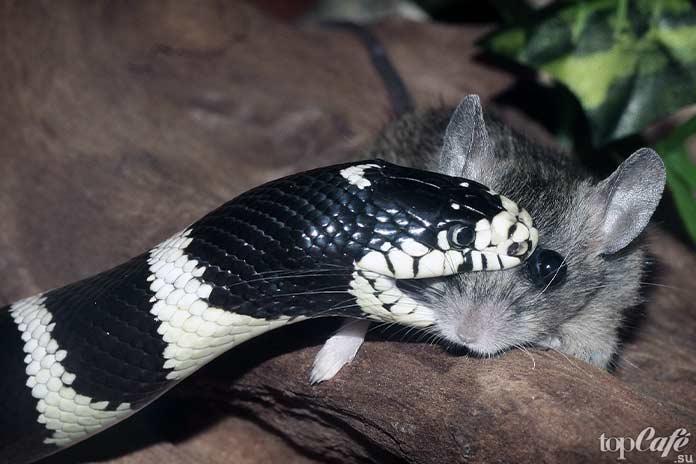 Самые интересные факты о змеях: укус. CC0