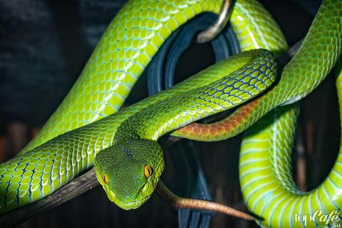 интересные факты о змеях