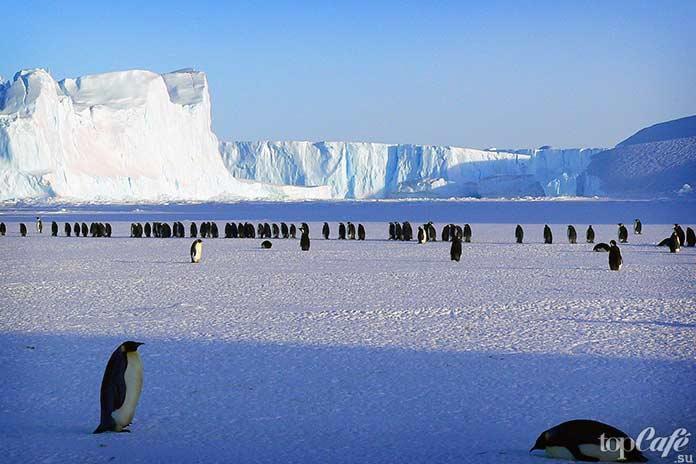 Ареал обитания пингвинов. СС0