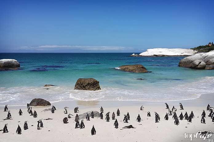 День пингвина. CC0