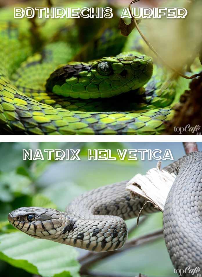 Красивые змеи