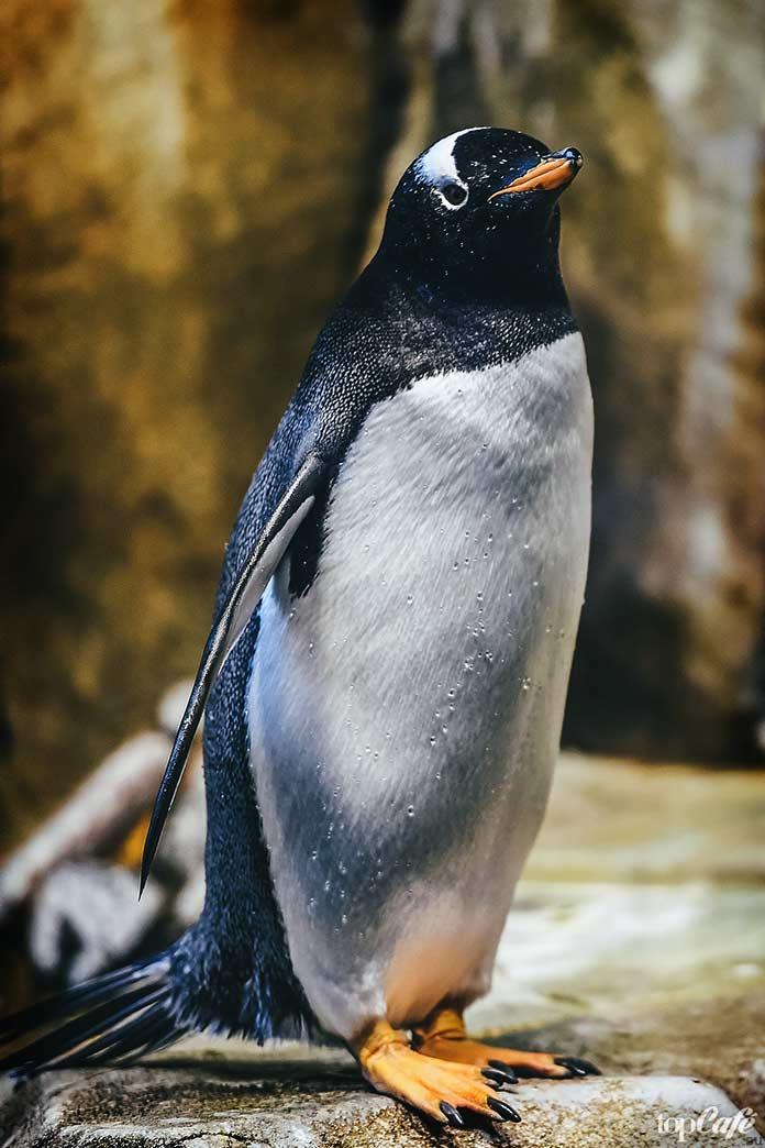 факты о пингвинах: Название. СС0