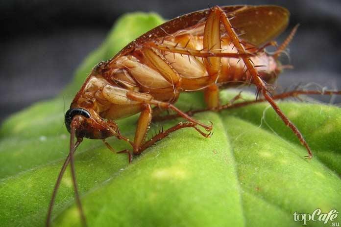 Лучшие способы, чтобы избавиться от тараканов. CC0