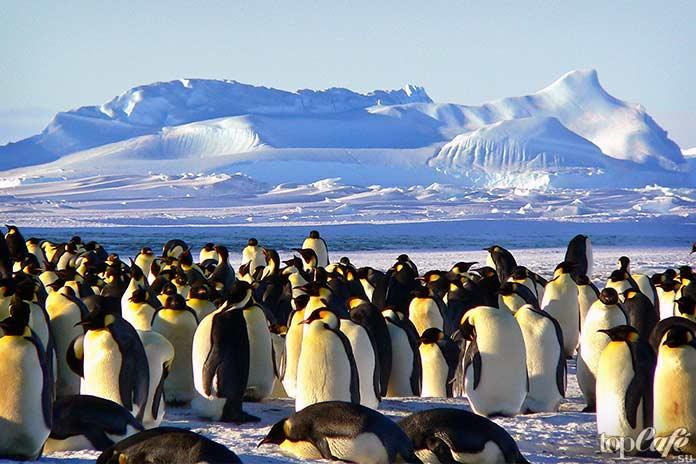 Интересные факты о пингвинах. CC0