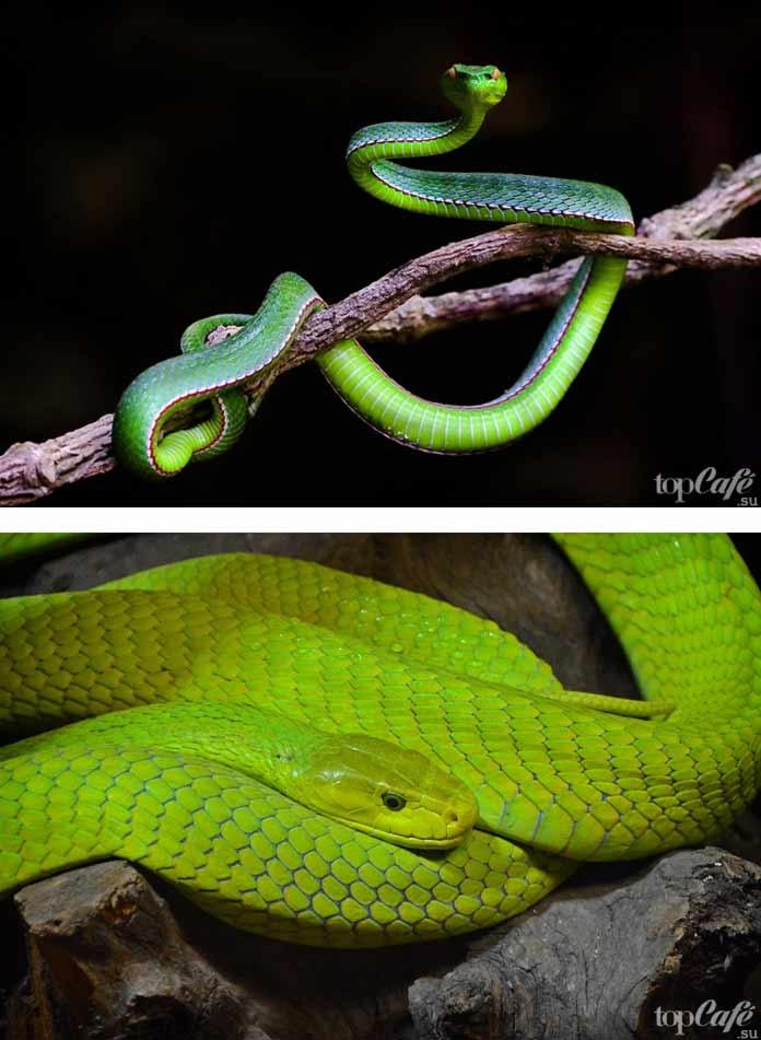 Фотографии змей. CC0