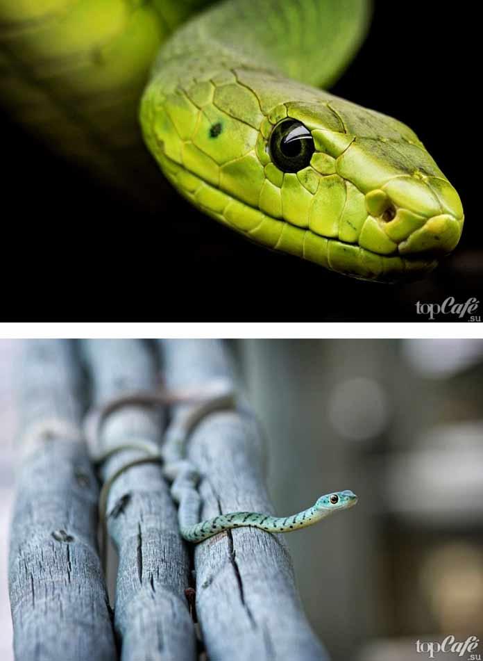 Красивые змеи. CC0