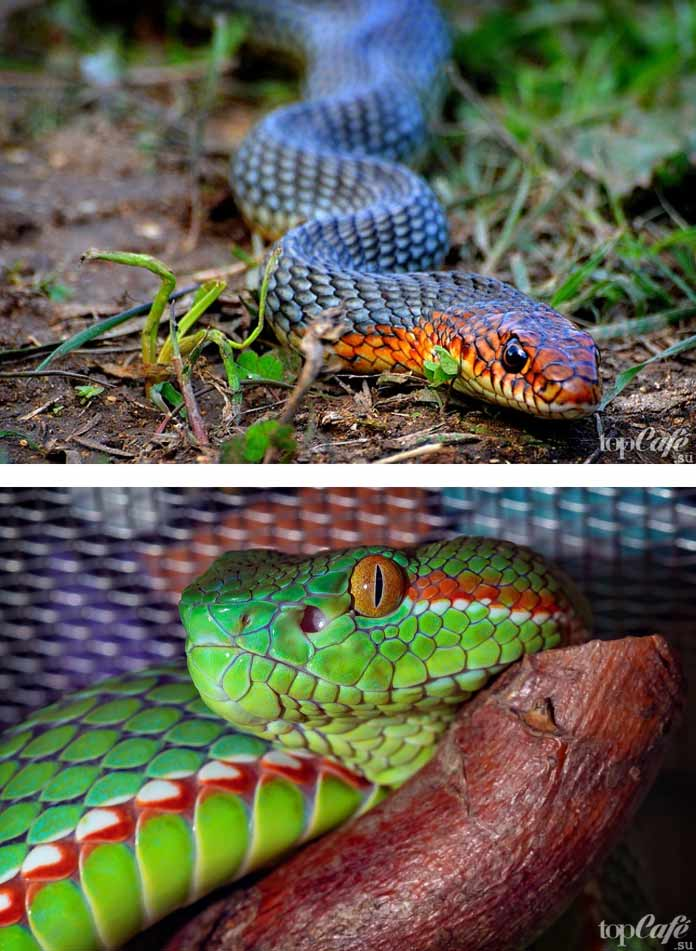 Самые красивые змеи. CC0