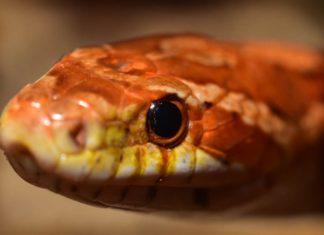 Змеи. CC0