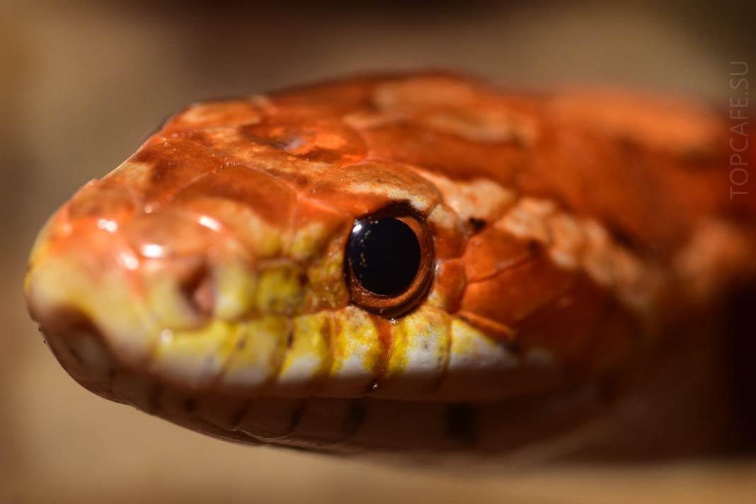 Самые красивые змеи в мире: Фото и описание видов