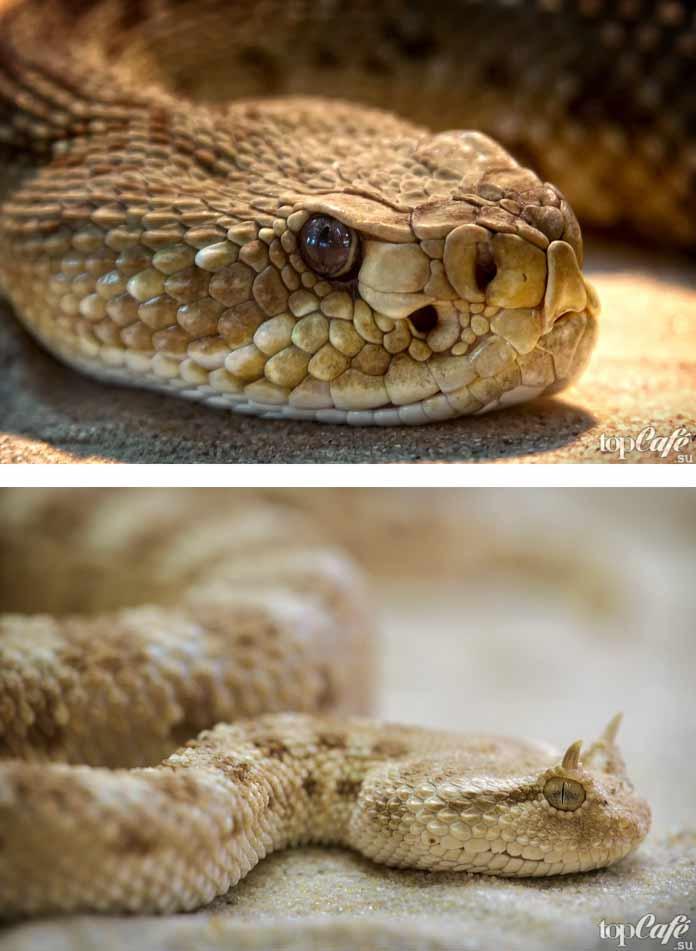 Красивая змея на фото. CC0