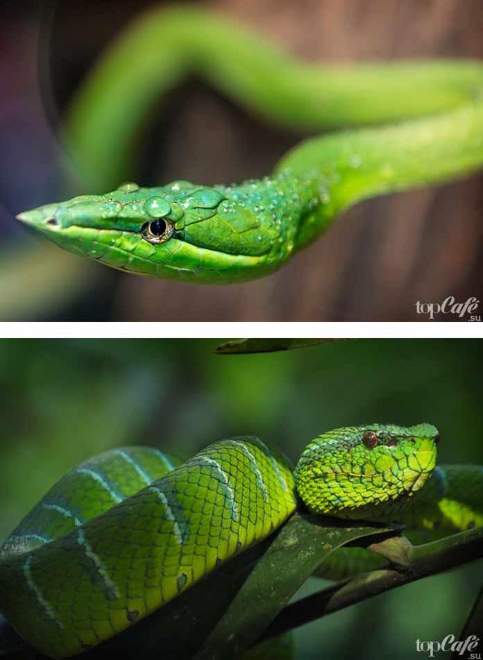 Очень красивые змеи. CC0
