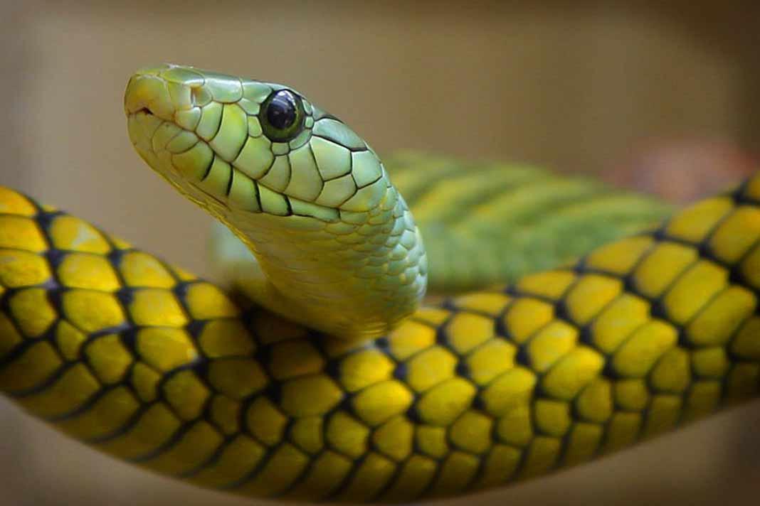 Змея. CC0