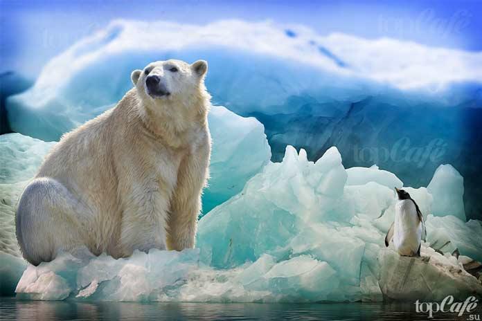 10 исчезающих животных, которых ещё можно спасти. CC0
