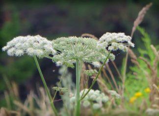 Растения. CC0
