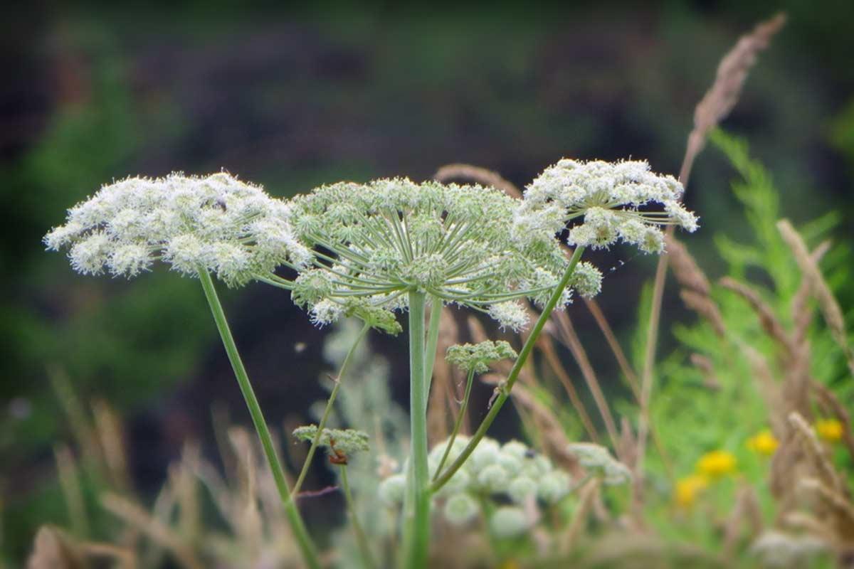 Виды вредных растений