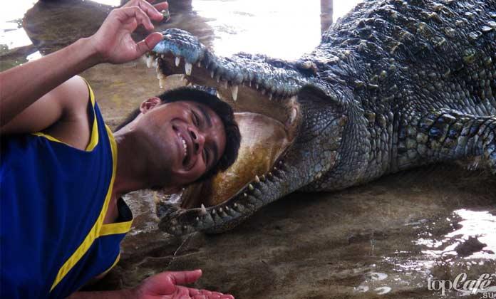 Факты о крокодилах: Опасное соседство. СС0