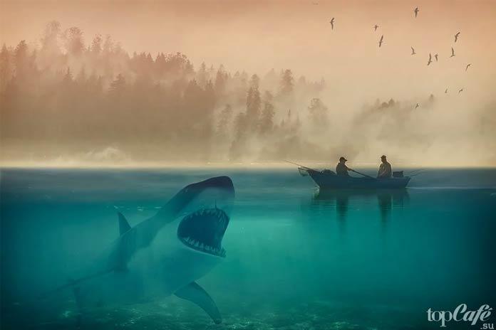 Невероятные акулы: Большая белая акула. CC0