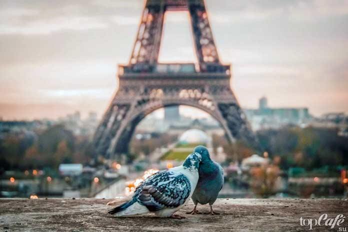 Франция / Париж. CC0