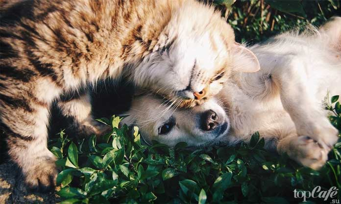 Кошка и собака: лучшие средства от глистов. CC0