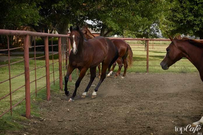 Самые дорогие животные: Лошадь. CC0